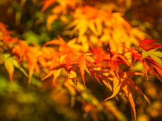 Days out… Westonbirt Arboretum
